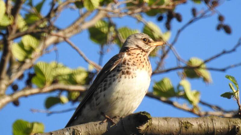 Rola siedlisk w procesie inwentaryzacji ptaków